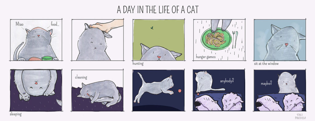 Diego The Cat - A Day In The Life Of A Cat