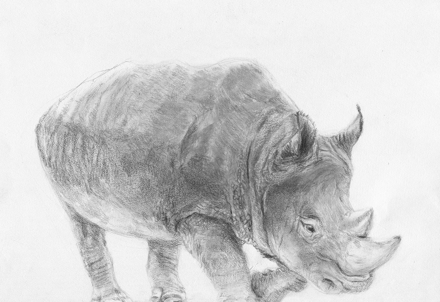 Rhinoceros Sketch