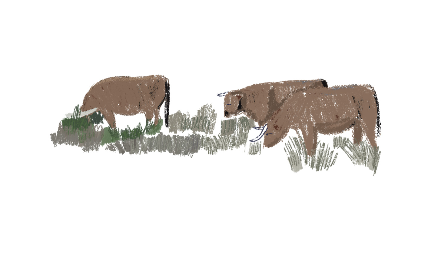 Akouba - Bulls Background